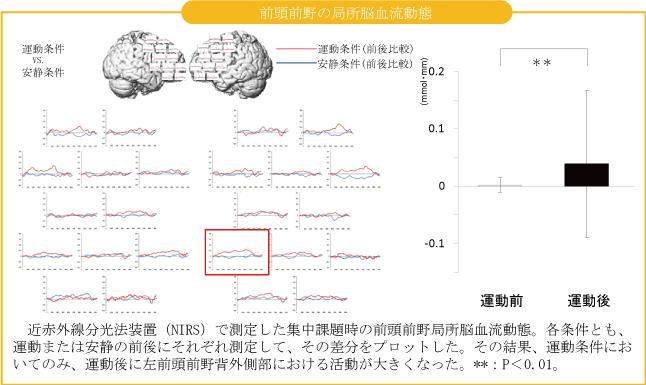 脳の活性化_子供の運動